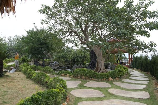 Vườn Bồ Đề chùa Ba Vàng.