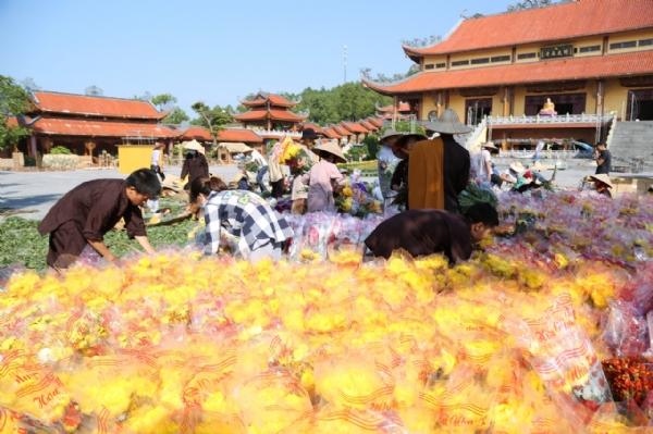 Những bông hoa cúc rực rỡ trên sân chánh điện chùa Ba Vàng.