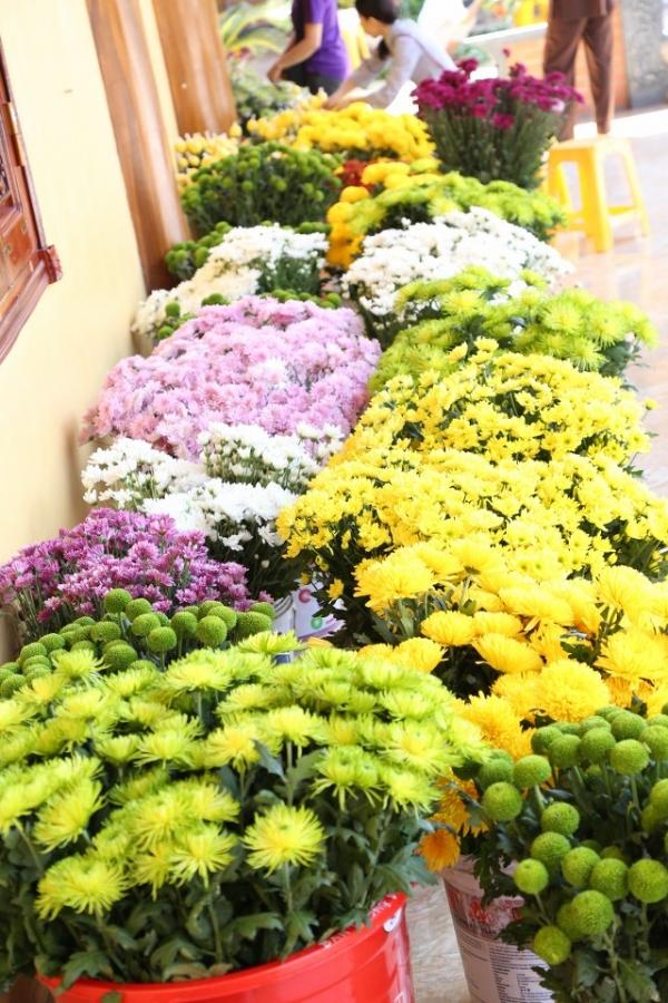 Những bông hoa cúc nhiều màu sắc.