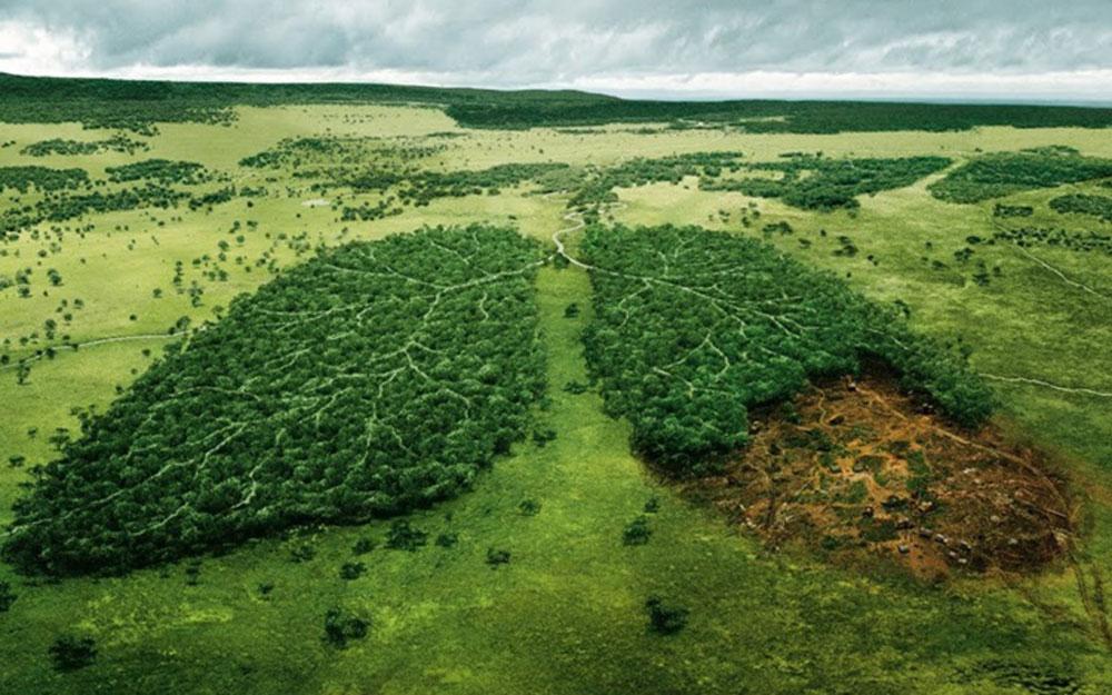 Rừng Amazon lá phổi xanh của thế giới