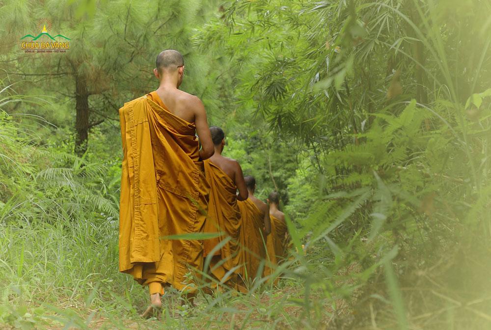 Chư Tăng Chùa Ba Vàng tu tập trong rừng