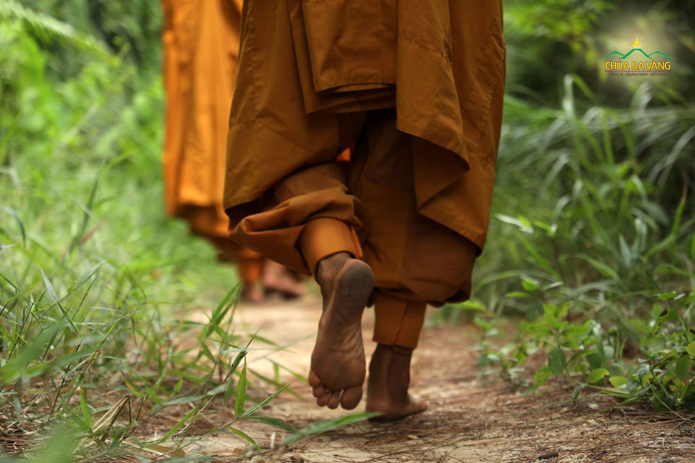 Đôi chân trần bước đi tự tại trong rừng