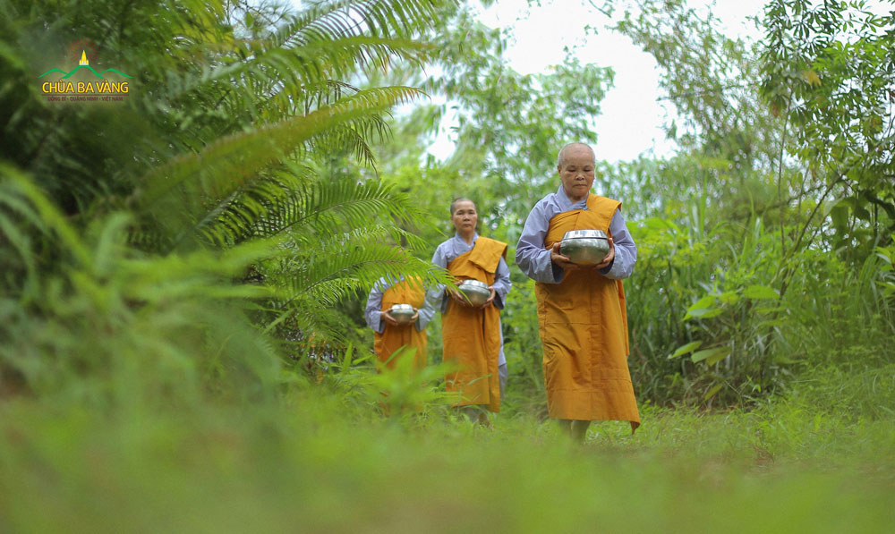 Chư Ni chùa Ba Vàng thực hành pháp viễn ly các dục - Làm bạn với rừng