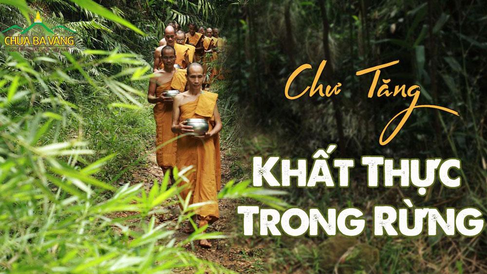 Chư Tăng chùa Ba Vàng thực hành hạnh khất thực trong rừng