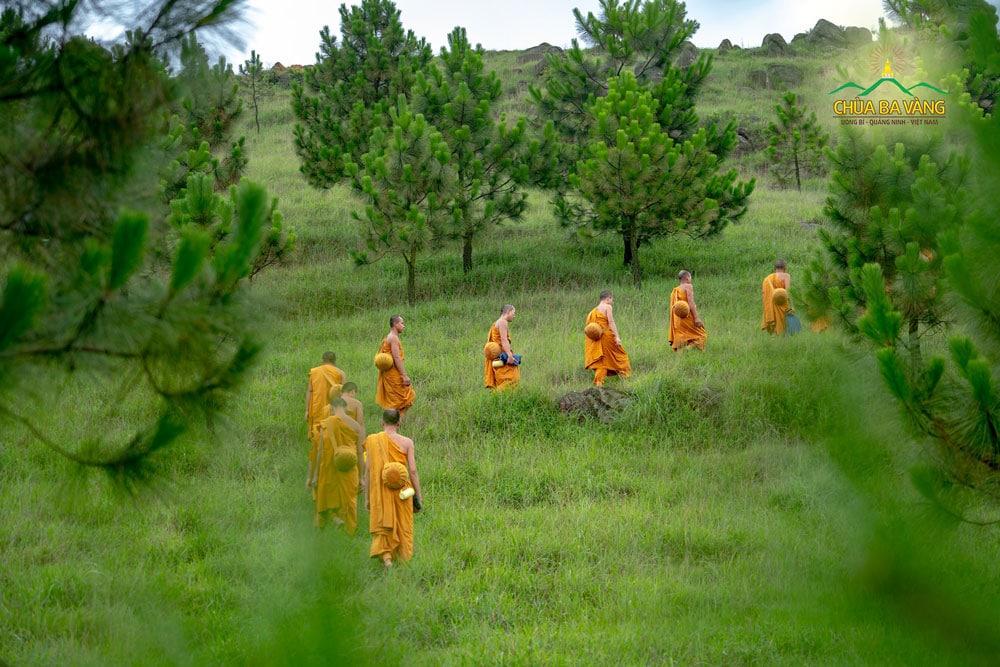 Chư Tăng chùa Ba Vàng thực tập tu tập sống trong rừng, viễn ly với các dục lạc