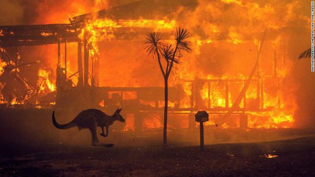 Đại thảm họa cháy rừng tại nước Úc