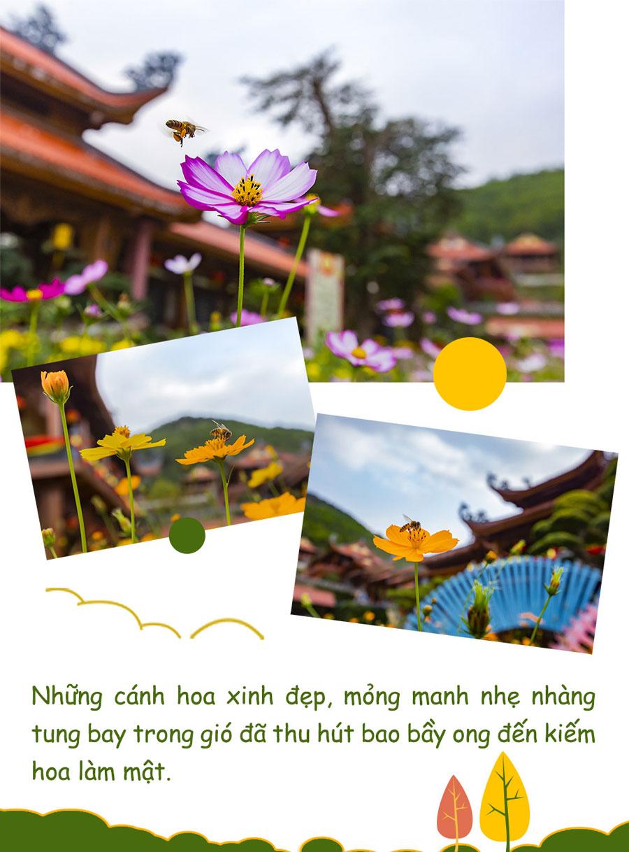 Hình ảnh những con ong nhỏ bé chăm chỉ tìm hoa gây mật dâng hương cho đời
