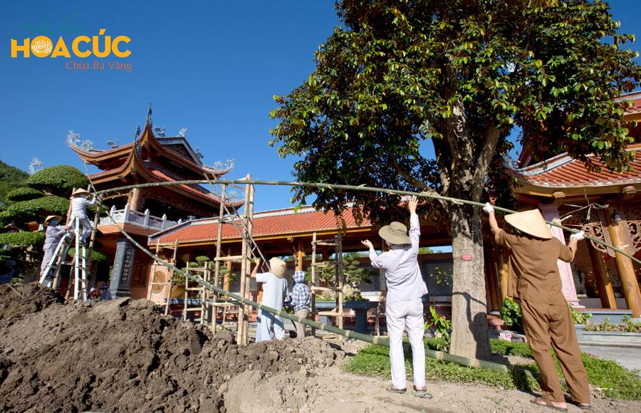 Các Phật tử hăng say tham gia công tác chuẩn bị cho Lễ hội Hoa Cúc