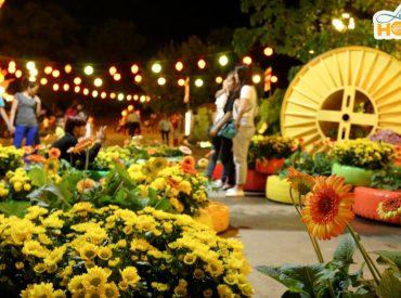Lễ hội Hoa Cúc là lễ hội thường kỳ được tổ chức vào dịp Tết Trùng Cửu tại chùa Ba Vàng