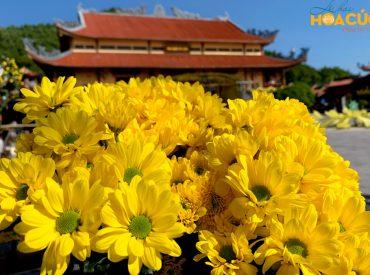 Hơn 100.000 bông hoa cúc rực rỡ khoe sắc hương trong Lễ hội Hoa Cúc chùa Ba Vàng 2020